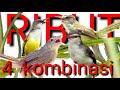 Suara  Kombinasi Burung Prenjak Ribut Cocok Buat Mikat  Mp3 - Mp4 Download