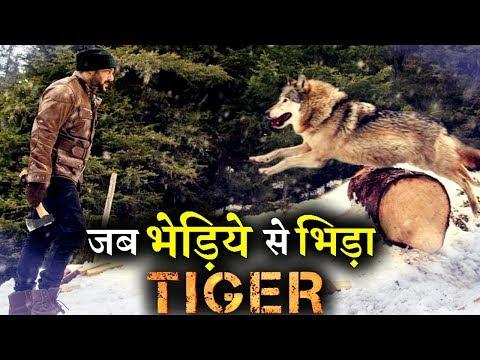 New Still: Salman Khan Fighting with a WOLF in TIGER ZINDA HAI