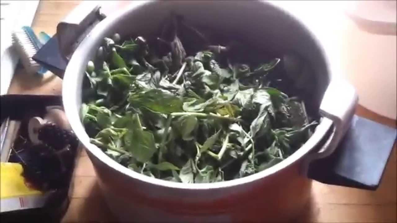 Distillation huile essentielle de menthe youtube for Alcool de menthe fait maison