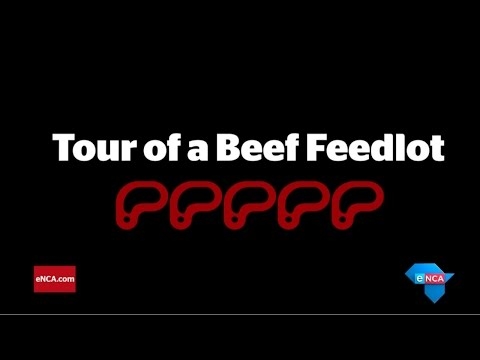 Tour of a Beef Feedlot | Denver, Colorado | AGOA