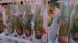 Обзор орхидей из Икеи,Леруа