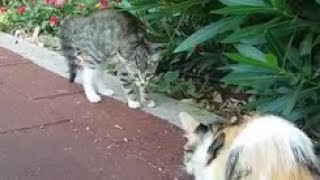 Kitten scared of cat because the first time he saw a adult cat else than her mom