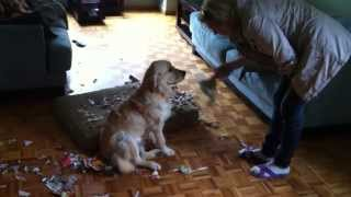 How To Teach Dog Not To Make A Mess