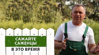 видео Особенности посадки саженцев плодовых деревьев
