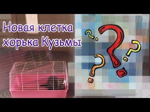 КАКУЮ КЛЕТКУ МЫ КУПИЛИ?/Обзор клетки хорька Кузьмы