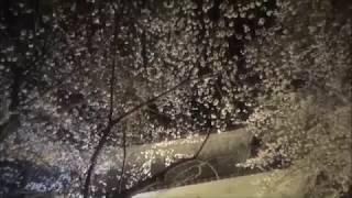 【夜桜】エア彼氏と一緒に! Air boyfriend thumbnail