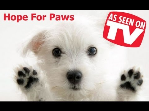 Hope For Paws on the Bonnie Hunt Show