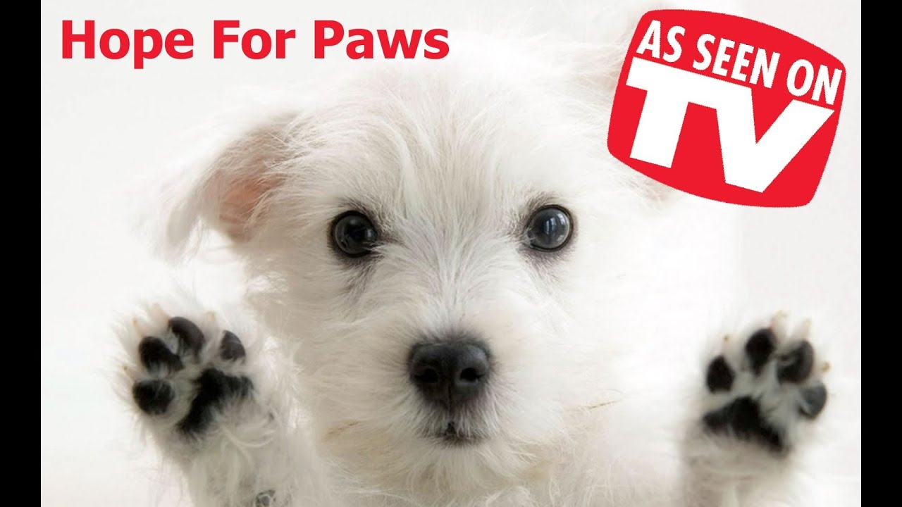 Hope for paws
