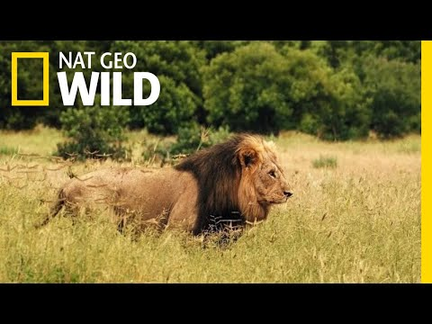 Savage Kingdom: Uprising - Trailer | Nat Geo WILD