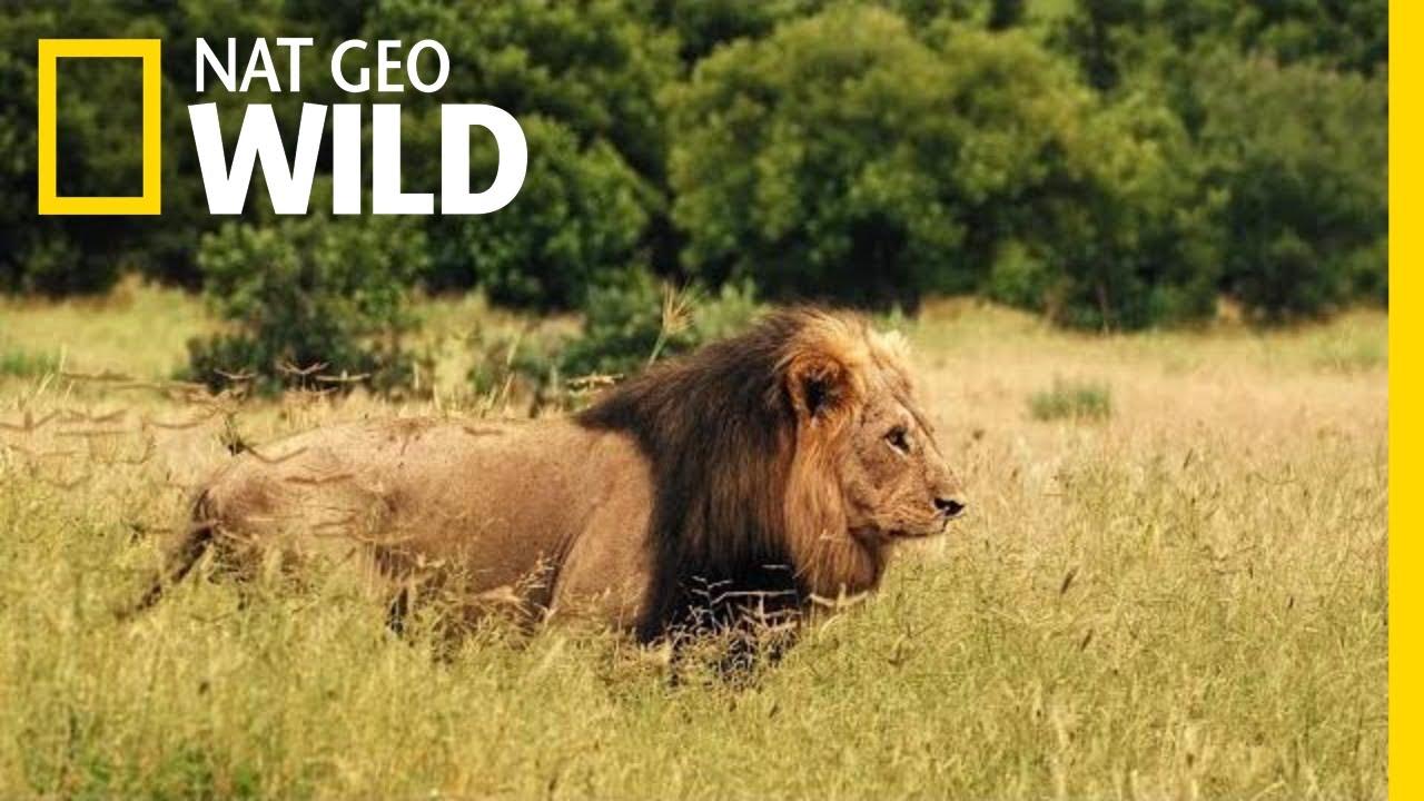 Net Go Wild