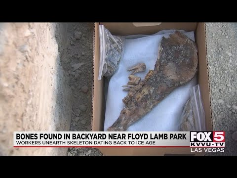 Homeowners discover bones dating back to the Ice Age