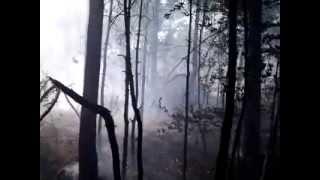 Pożar lasu w Kluczach - 17.08.2013