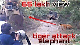 Tiger attacks elephant in jim corbett on 17th Nov