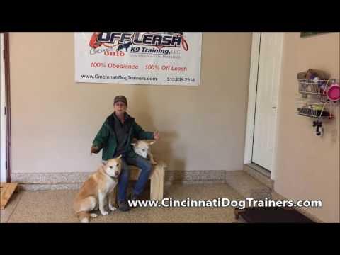 Husky Lab Amazing Training Testimonial at Cincinnati Dog Trainers Off Leash K9