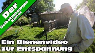 Ein Bienen - Video zur Entspannung. Ohne Gequatsche. :)