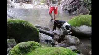 2016.6.5撮影。 ボーダーコリー6ヶ月の女の子。 犬生3回目の水遊び。す...