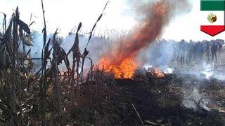 Helicopter crash claims Puebla governor, senator in Mexico - TomoNews