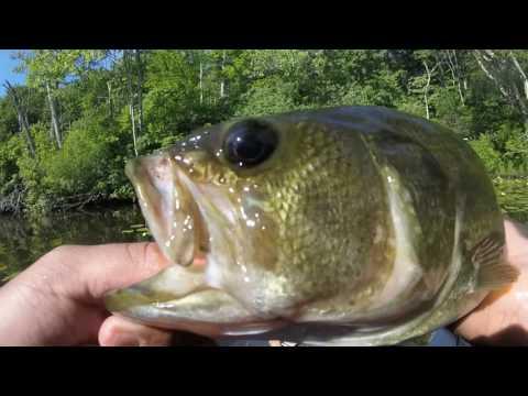 Kayaking & Fishing On Lake Williams, CT