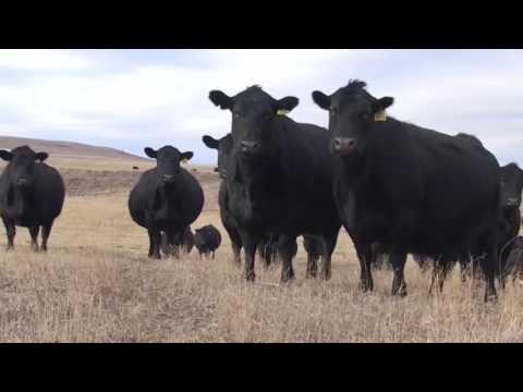 MT Livestock Ag Credit CEO Ty Wells Gives Ag Lending Advice