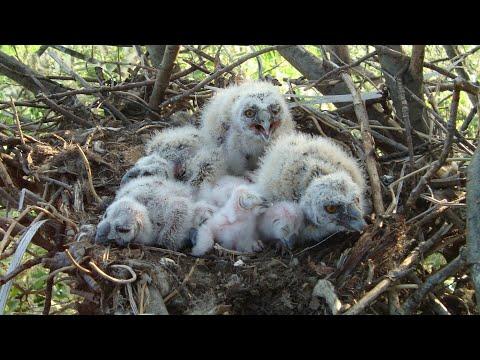 Тайная жизнь птиц Птичий рай Птицы России Фильм 32