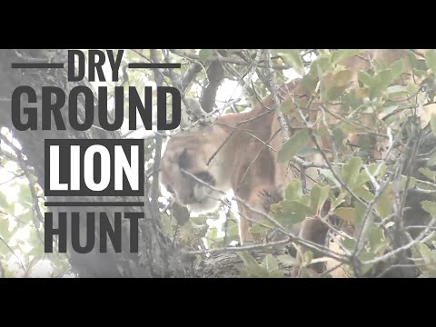 Arizona Dry Ground Lion Hunt