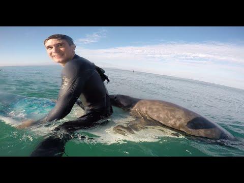 Un phoque tente de surfer, plouharnel, creperie