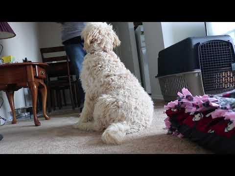 Service Dog Promo Kiwi