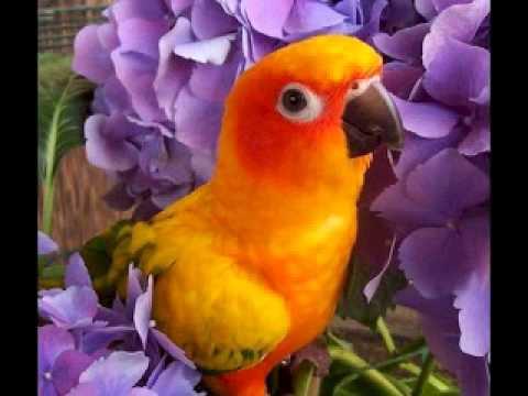 Suoni della natura cinguettio di uccelli youtube - Semplici disegni di uccelli ...