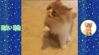 ペットと動物は楽しいです。猫 おもしろ 動画, このシャネルは、すばら...