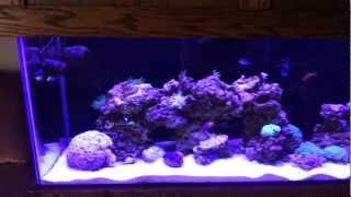75 Gallon mixed reef, Miracle mud, Dawn lighting