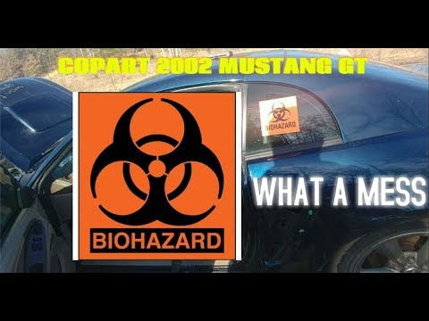 79ff8c2118d 2002 MUSTANG GT BOUGHT FROM COPART BIOHAZARD FOUND  200 DOLLAR SUNGLASSES  AND CREDIT CARD