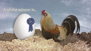 Ask Us Anything: Which Came First, The Chicken Or The Egg?