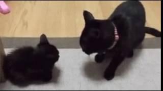 Кошка мама воспитывает котенка))