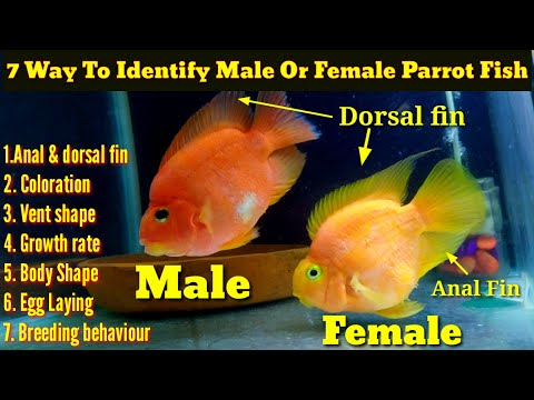 7 Way To Identify Male Or Female Parrot Fish