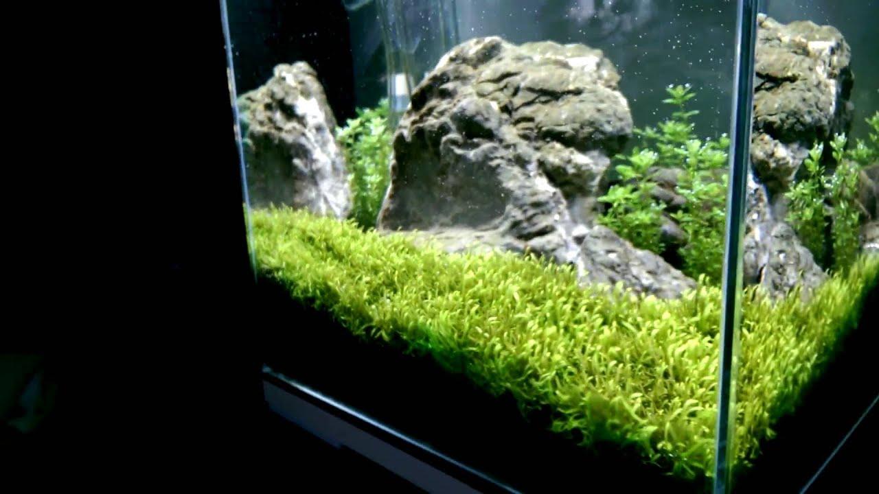 Nano nature aquarium 27l