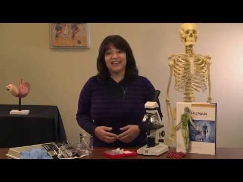 Apologia's Advanced Biology: The Human Body Video Instruction with Sherri Seligson