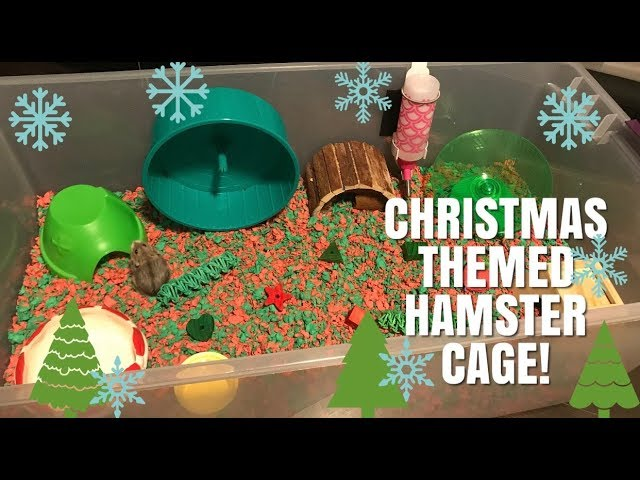 giving-henry-a-christmas-themed-cage-vlogmas-day-7