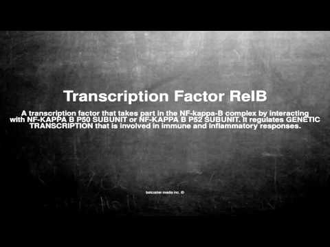 Medical vocabulary: What does Transcription Factor RelB mean