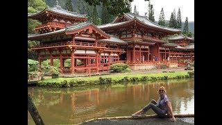 #1124 США Гавайи Экскурсии с Наташей Шоу дельфинов Буддийский храм
