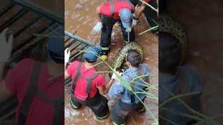 Firefighters Struggle to Rescue Thrashing Anaconda || ViralHog