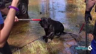 SDHS Emergency Response Team Rescues Dogs in South Carolina