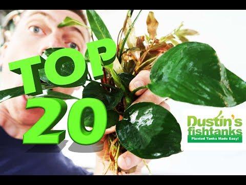 Aquarium Plants My TOP 20 FAVORITE Species of Fish Tank Plants. Live Aquarium Plants Talk in Denver