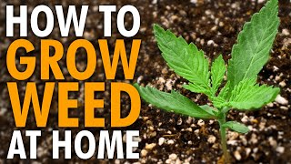 How to Start Growing Weed From Home - Easy Guide