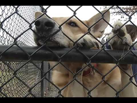 Fairfax County's Animal Shelter Adoptions