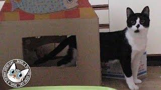 【Jean & Pont 1163】譲渡会の翌日普段通りに戻る保護猫たち 2018/2/12 ジャン ポン しおん あんず チャコ thumbnail