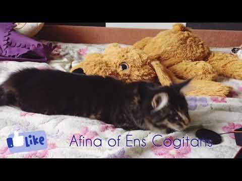 Afina of Ens Cogitans