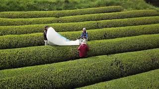 津野山茶萌える新芽と霧のベール