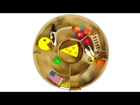 How to Make Creative Round Maze for Rats