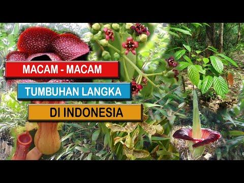 10 Daftar Tumbuhan Langka Di Indonesia Yang Terancam Punah Youtube