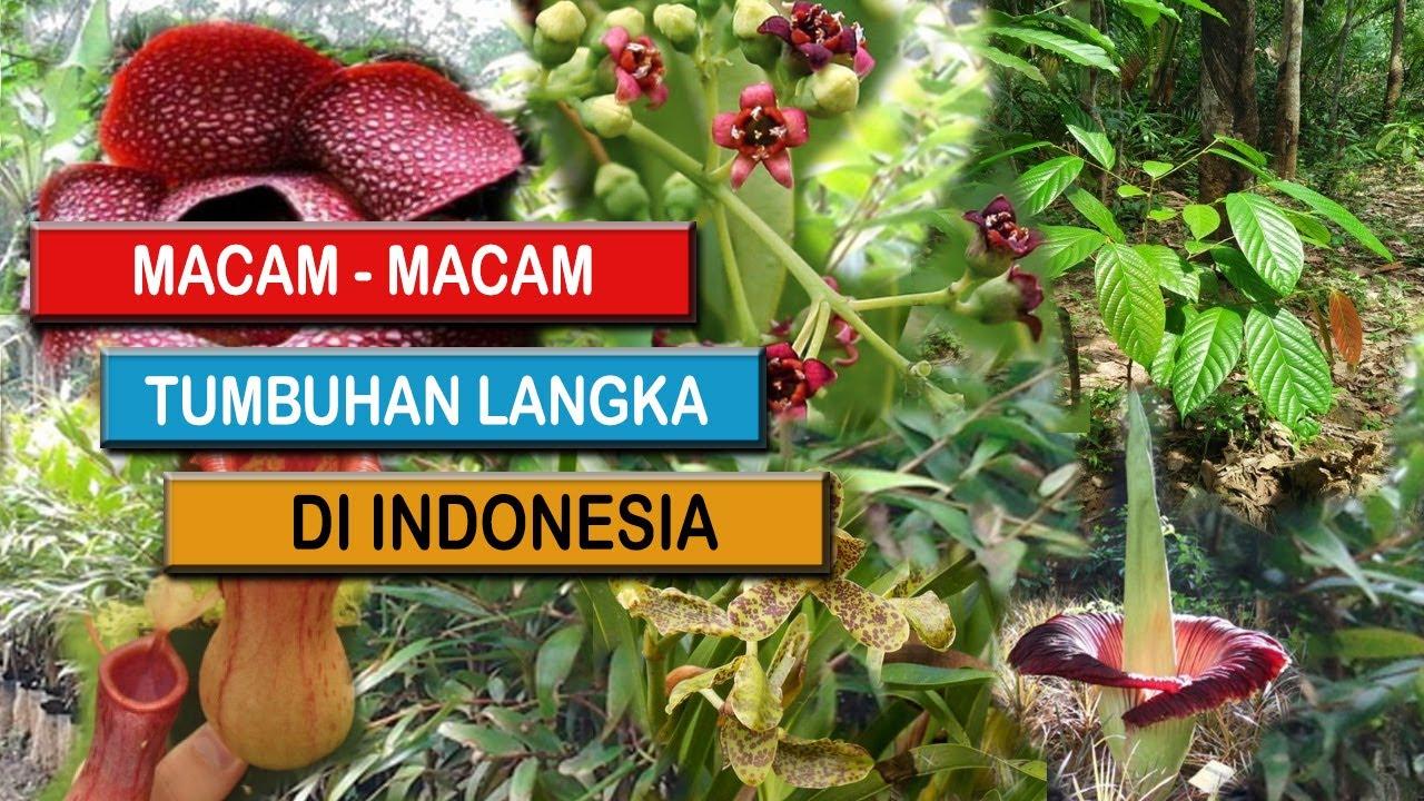 10 Daftar Tumbuhan Langka Di Indonesia Yang Terancam Punah